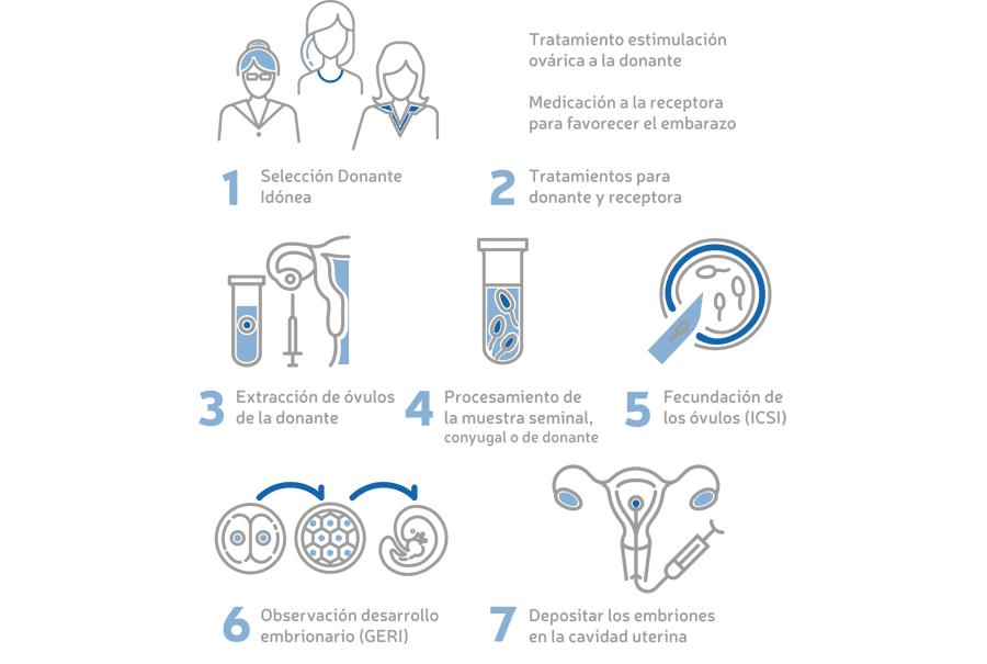 Infografía de tratamiento de Ovodonación en Fertility Madrid
