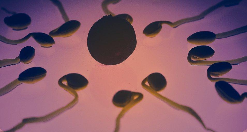 diferencias-entre-fecundacion-in-vitro-e-icsi