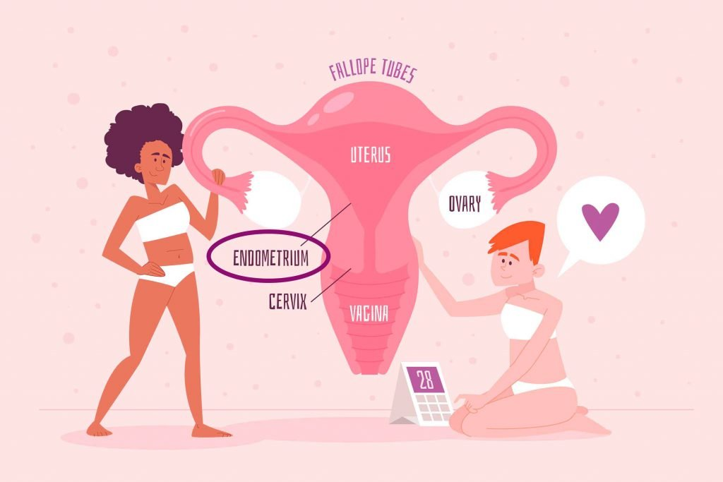 ubicacion-endometrio
